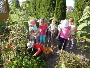 Plony z naszego przedszkolnego ogródka
